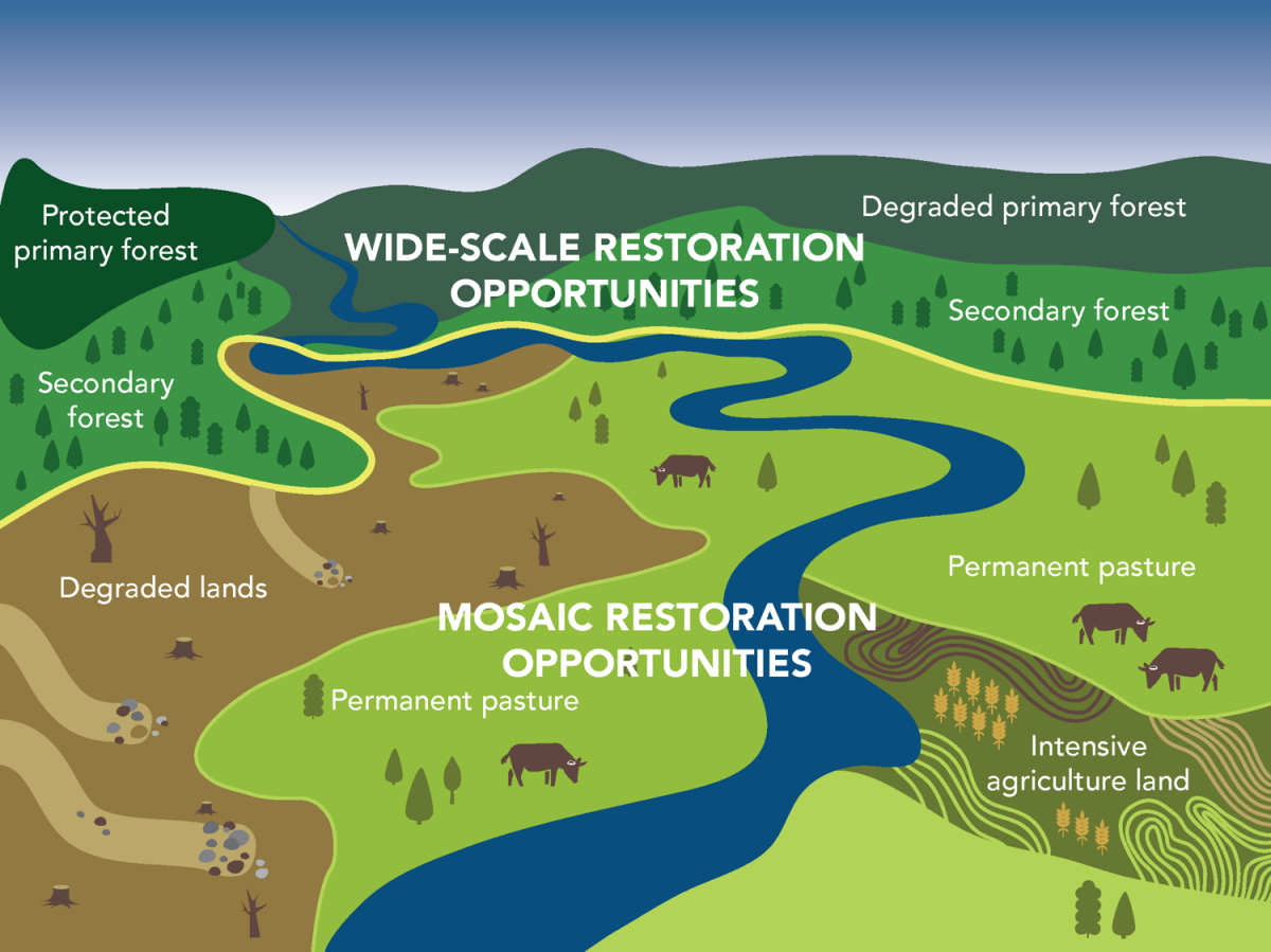 Accelerating Action on Forests and Landscape Restoration in