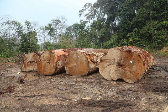 Harvesting logs in Malaysia. Photo by Wakx/Flickr