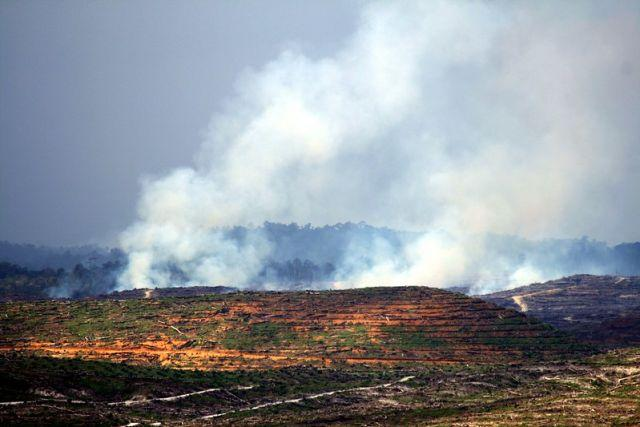 Many farmers in Indonesia use slash-and-burn methods to clear land for agriculture. Photo by Wakx/Flickr