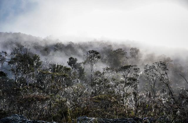 Intact forest in Papua. Photo credit: Yusuf Ahmad for WRI Indonesia