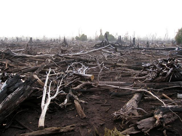Burned forest in Central Kalimantan 2011, Indonesia. Credit: Rini Sulaiman/ Norwegian Embassy