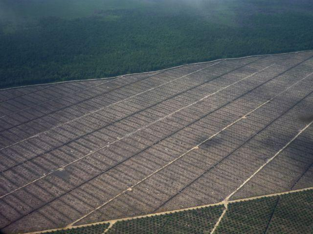 Deforestation in Sarawak, Malaysia driven by palm oil. Flickr/Wakx