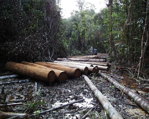 Deforestation is often associated with commodity production in Indonesia. Credit: Agung Prasetyo/CIFOR