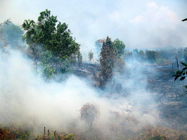 The majority of the fire alerts are concentrated in the Indonesian province of Riau, on the island of Sumatra. Photo credit: CIFOR/Flickr