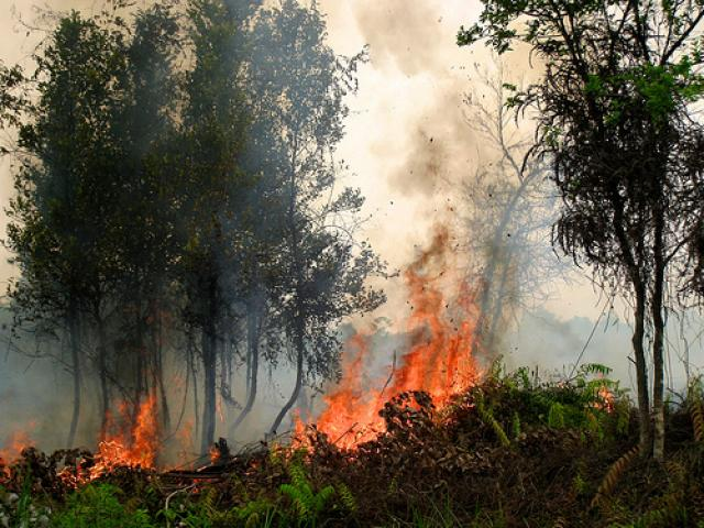 A forest fire in Central Kalimantan, Indonesia, in September of 2011. Photo credit: Rini Sulaiman/Norwegian Embassy for Center for International Forestry Research