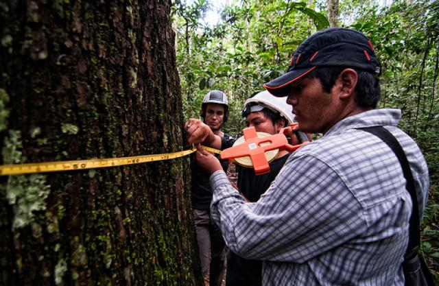Global Forest Watch is an online forest monitoring system created by the World Resources Institute and more than 40 partners. Photo credit: Marco Simola/CIFOR