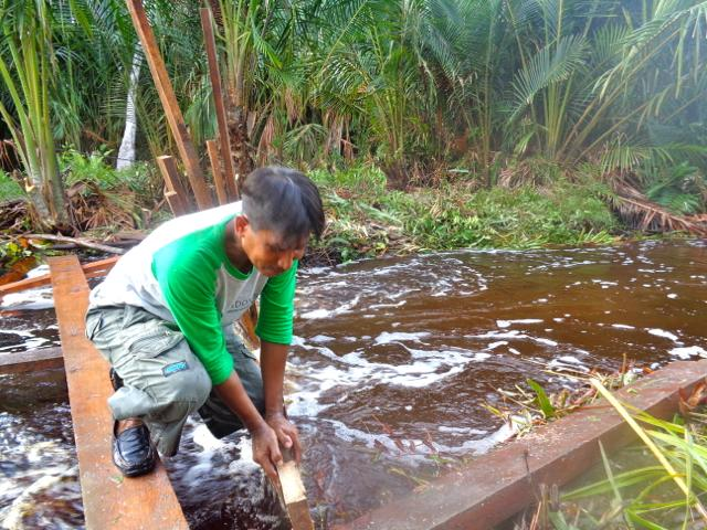 Abdul Manan, fixing the canal blocks when President Joko Widodo visited Sungai Tohor village in Riau, at end of November 2014. Villagers tried to prevent the water from flowing out by placing blocks in the canal. Photo credit: Indra Nugraha/Mongabay Indonesia