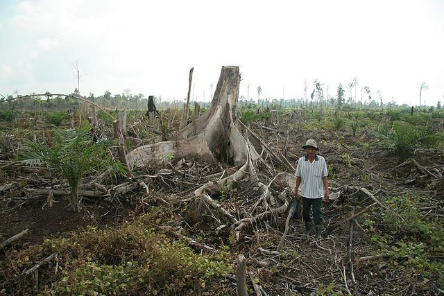 A comprehensive, proactive fires prevention plan, with a special emphasis on key subdistricts in Riau Province—involving government, business, and NGOs—can help ensure that Indonesia's forests continue generating economic, social, and environmental benefits for years to come. Photo credit: Wakx/Flickr