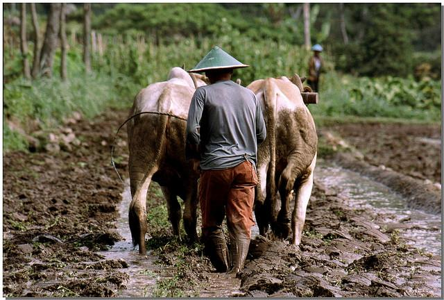 While the struggle to protect the Tripa peat forest will likely continue, it illustrates a positive message for Indonesia's forests. Photo credit: CIFOR/Flickr