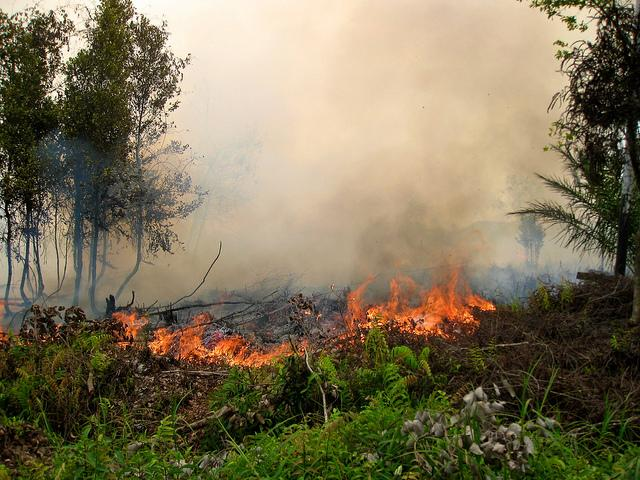A forest fire in Central Kalimantan, Indonesia, in 2011. Photo credit: Rini Sulaiman/Norwegian Embassy
