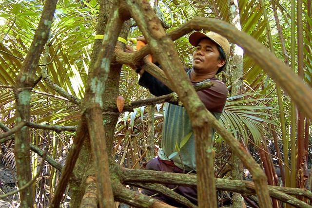More than 80 million Indonesians rely on forests for their livelihoods. Photo credit: Daniel Murdiyarso/CIFOR