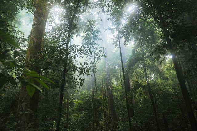 Primary rainforests are critically important for storing carbon and providing habitat for jaguars, orangutans, gorillas and other animals. Photo by stokpic/Pixabay