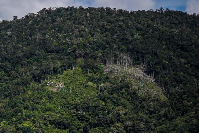 Logging in the forest. Photo: Yusuf Ahmad for WRI Indonesia