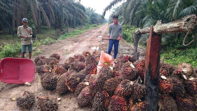 Harvesting oil palm in Indonesia. Photo by Aul Rah/Flickr