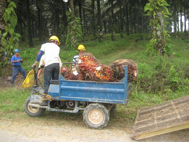 Indonesia exported $19.7 billion of crude palm oil in 2011. Photo Credit: Beth Gingold/WRI