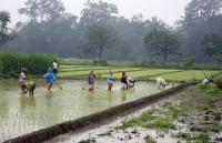 Farming rice near Yogyakarta. Photo by Gunawan Kartapranata/Wikimedia