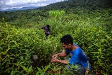 Erosi tanah akan berpengaruh pada produktivitas pertanian. Kredit foto: Kemal Jufri/Koalisi FOLU