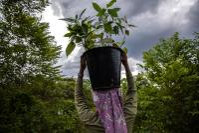 Intervensi bagi permasalahan pangan sebaiknya tidak dilakukan dengan cara-cara yang memiliki risiko lingkungan, ekonomi, dan kesehatan. Foto oleh Kemal Jufri untuk WRI Indonesia