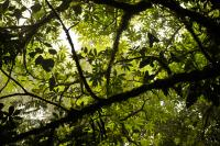 Forest canopy at Monteverde Cloud Forest Reserve. Photo credit: Aaron Minnick/WRI