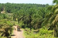 Oil palm plantation near Bengkulu, Sumatra. Photo by James Anderson/World Resources Institute.