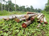 Image of logs. Photo credit: WRI Indonesia