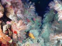 Ocean ecosystems are rich sources of compounds used in medicine. Photo by Bob Embley/NOAA.