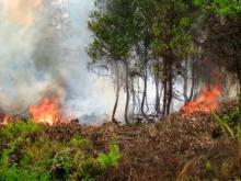 Satelit NASA mencatat 734 peringatan titik api yang berpotensi tinggi di provinsi-provinsi di Sumatra di antara 22-27 Agustus. Sumber foto: Rini Sulaiman/Kedutaan Norwegia