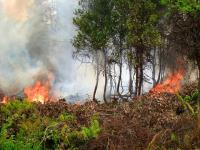 Forest fire in Indonesia. Photo Credit: CIFOR/Flickr
