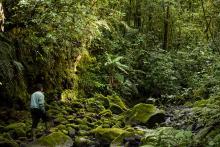Hutan di wilayah Kerinci, Sumatra, Indonesia. Sumber foto: Luke Mackin/Flickr