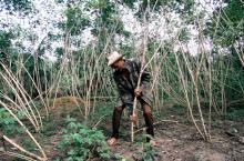 Melakukan analisis kelebihan dan kekurangan pemerintah dapat menjadi langkah penting awal untuk meningkatkan reformasi pengelolaan hutan. Sumber foto: World Bank/Flickr