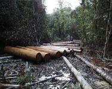 Deforestasi seringkali dihubungkan dengan produksi komoditas di Indonesia. Sumber foto: Agung Prasetyo/CIFOR