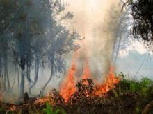 Kebakaran di Kalimantan Tengah, Indonesia. Sumber foto: Rini Sulaiman/ Kedutaan Norwegia
