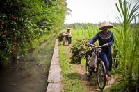 Farmers in Yogyakarta. Indonesia's government is charting a new, low carbon path to development. Photo by the International Rice Research Institute.