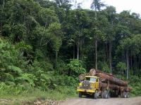 A large portion of Indonesia's emissions come from deforestation and land-use change. Photo by Hari Priyadi/Center for International Forestry Research (CIFOR)
