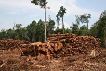 Indonesia kehilangan lebih dari 6 juta hektar hutan primer dari tahun 2000 hingga 2012. Sumber foto: Rainforest Action Network/Flickr