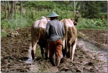 Meskipun usaha untuk melindungi hutan gambut Tripa akan terus berlanjut, kasus ini menunjukkan pesan yang positif bagi hutan-hutan di Indonesia. Sumber foto: CIFOR/Flickr