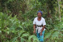 Hutan Indonesia. Sumber foto: James Anderson/WRI