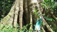 APP berkomitmen untuk menghentikan penebangan hutan alami di Indonesia. Sumber foto: netaholic13/Flickr