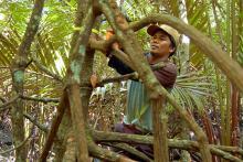 Lebih dari 80 juta masyarakat Indonesia tergantung kehidupannya kepada hutan. Sumber foto: Daniel Murdiyarso/CIFOR.