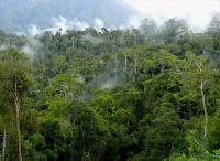 WRI baru saja mengeluarkan dua aplikasi pemetaan online baru yang dibuat untuk membantu industri kelapa sawit tumbuh sekaligus menghindari deforestasi. Sumber foto: CIFOR/Flickr