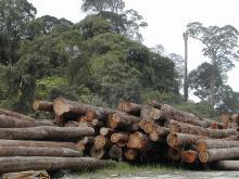 Fragmentasi hutan disebabkan oleh ekspansi penebangan hutan, penambangan, dan pembangunan. Sumber foto: Angela Sevin, Flickr.
