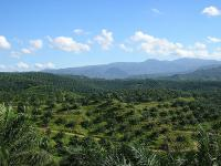 Most palm oil comes from Indonesia and Malaysia. Photo credit: Achmad Rabin Taim/Wikimedia Commons