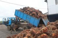 Unloading oil palm fruits. Photo by African Hope/Wikimedia Commons