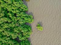Mangroves offer many environmental benefits, which means that its management requires the involvement of various stakeholders. Photo: Waranont/Unsplash